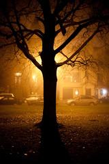 Thanksgiving Fog - Albany, NY - 09, Nov - 08 by sebastien.barre