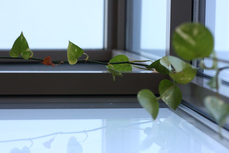 Day 262. Plant in window