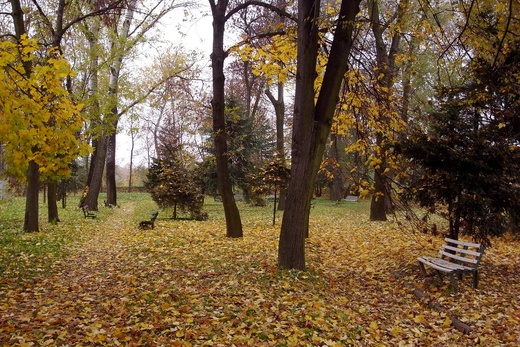 Stary park / Old park