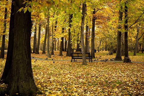 fall leaves leaf westbank westkelowna gellatlynutfarm