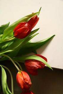 poppies   by zigwamp