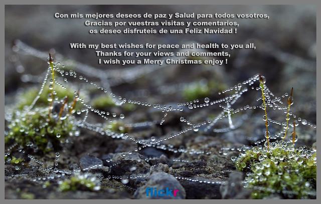 Os deseo a todos una Feliz Navidad  - Happy Christmas