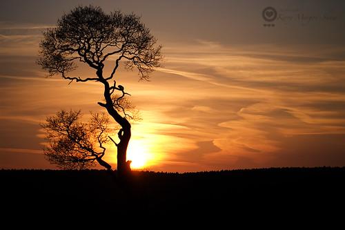 Ria's tree at Sunset