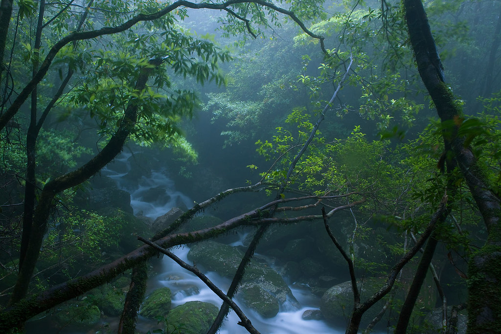 Peaking through, Yakushima Island | Just off the path i see … | Flickr