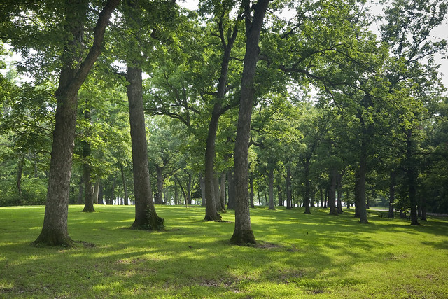 Lawn and Trees in Lake of Three Fires State Park