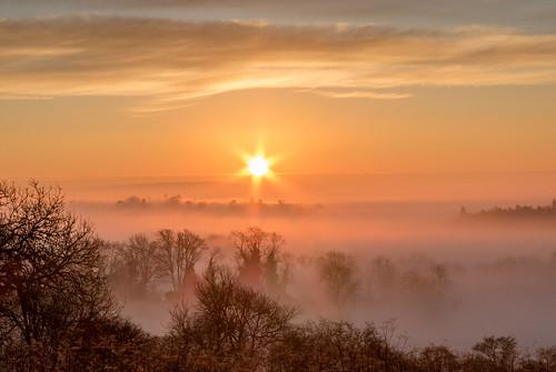 guildford surrey sunrise trees mist fog