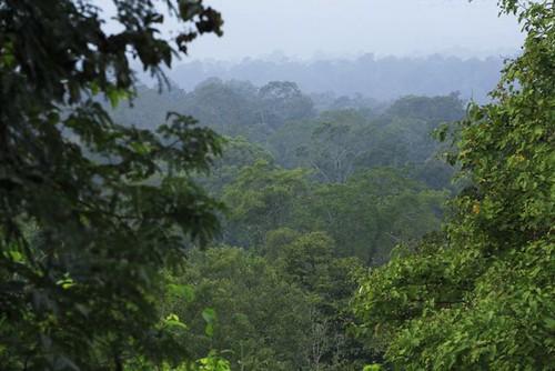 Wed, 11/21/2007 - 04:34 - Huai Kha Khaeng landscape. Credit: Christian Ziegler