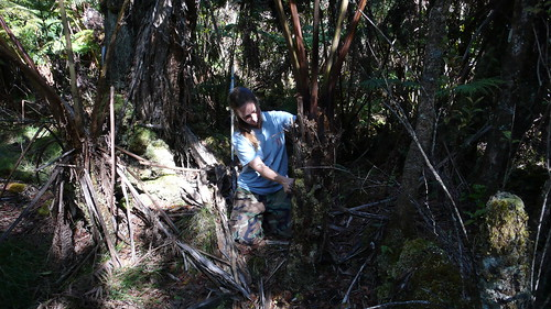 Sat, 12/13/2008 - 04:21 - Faith Inman (Plot Leader) measuring tree fern. 4-ha plot. Credit: CTFS