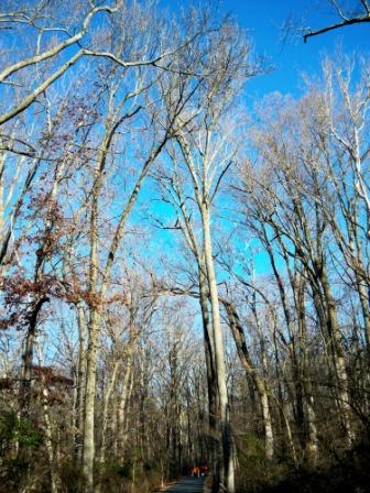 Wed, 12/03/2008 - 03:16 - SERC tree canopy, 2009.  Credit: SERC