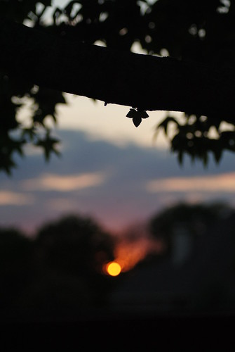 sunset sun one leaf focus bokeh flare lone 18200 sunflare backround