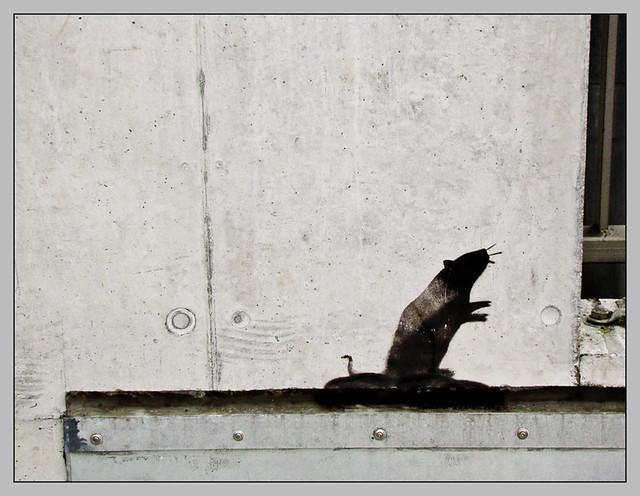 Ratte - Banksy