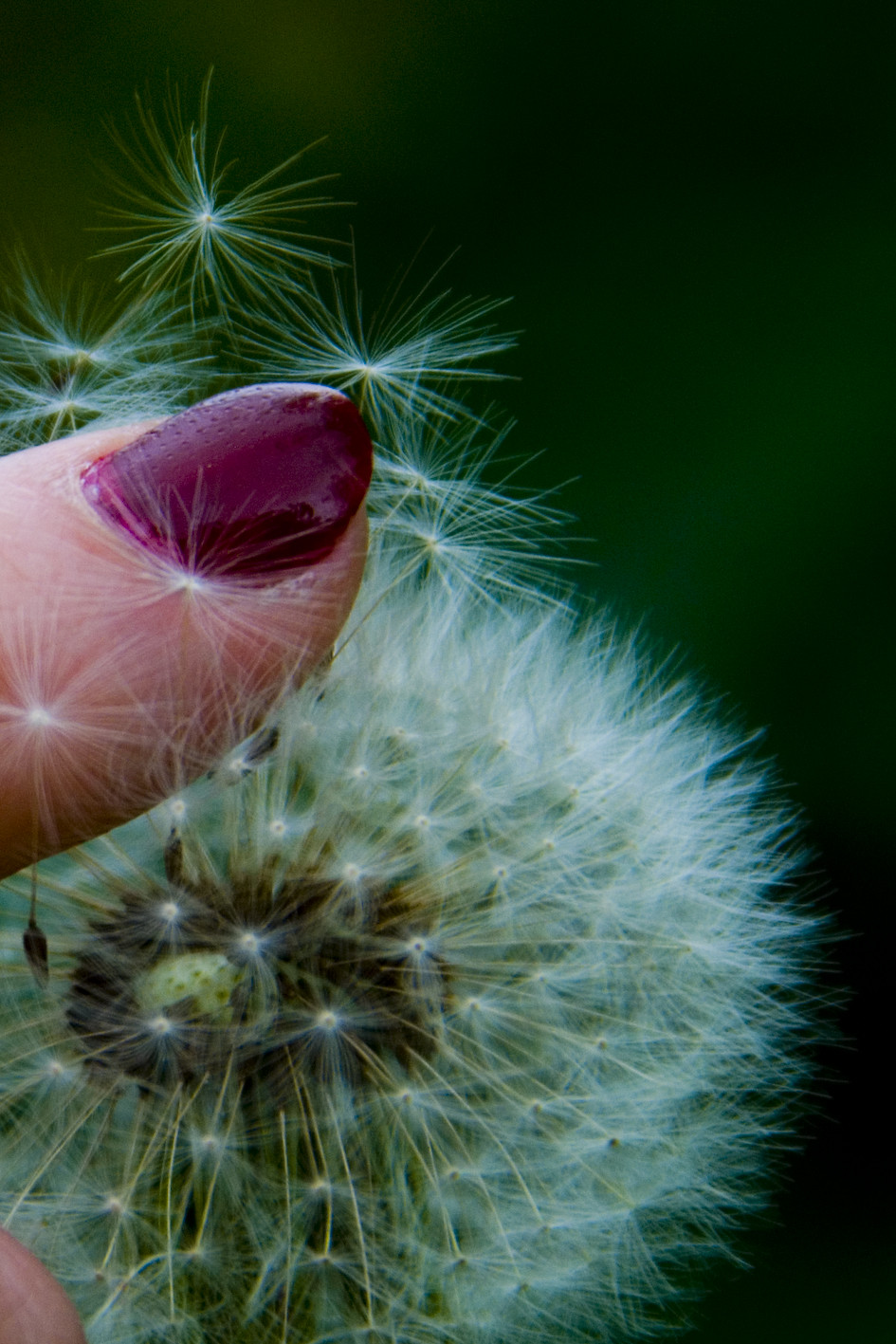 dandelion and nailpolish