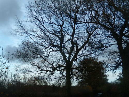 Silhouette tree 3 Knockholt Circular