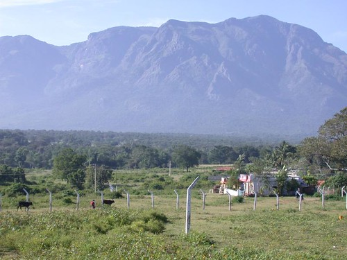 Tue, 03/16/2010 - 13:18 - A view of the Nilgiri hills from Masin Agudi, the town of the field station. Credit: Geoffrey Parker
