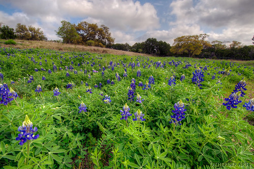 blue usa green austin texas tx country hill meadow bluebonnet wildflower hdr photomatix 3exp