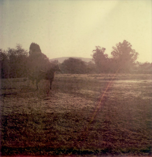 morning horse film field sunrise polaroid sx70 dawn fnd expired sebastopol 0909 atz
