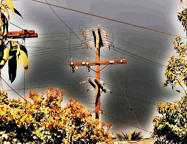 The telephone pole