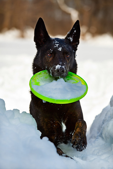 Who says you can't play frisbee in 3 feet of snow?