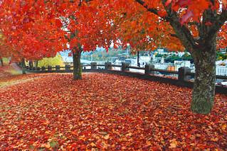 Oregon Autumn Part 4 | by Ian Sane