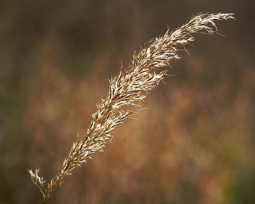 autumn bokeh bej