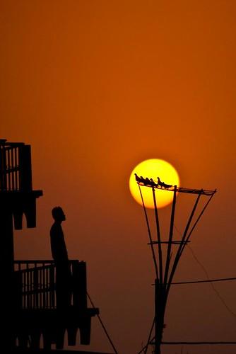 sunset silhouette pigeon dhaka bangladesh flickraward platinumheartaward tripleniceshot flickraward5
