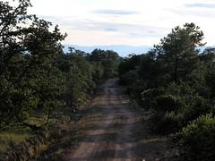 The road - El camino entre Refugio de los Pozos y Ameca, Zacatecas, Mexico