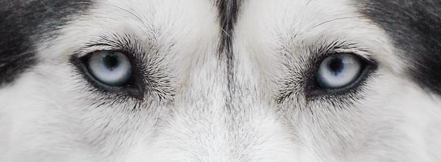Husky2a