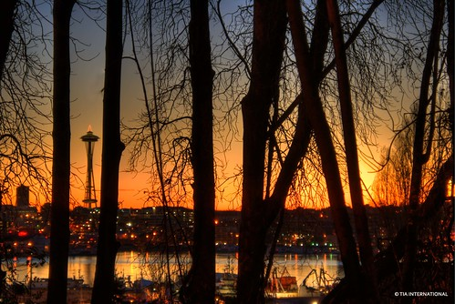 seattle trees sunset shadow urban colors silhouette forest tia landscape high december cityscape dynamic natural dusk branches landmark pacificnorthwest spaceneedle lakeunion trunks washingtonstate range hue hdr highdynamicrange eastlake tosinarasi tiascapes ©tiainternationalphotography