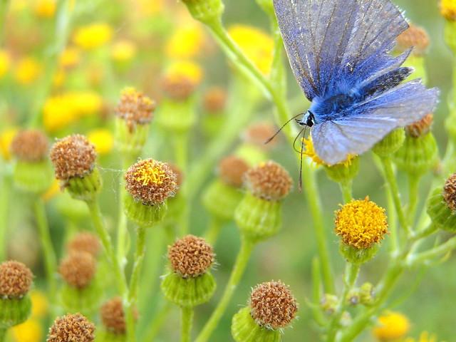BLUE IN FLOWERBED