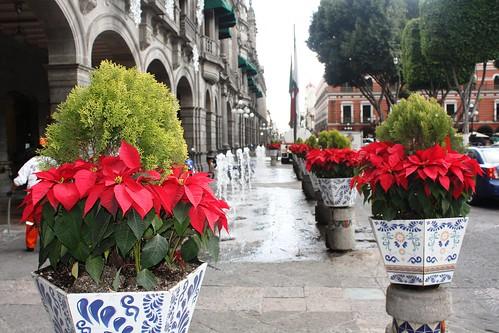 Callerón De Los  Sapos – Centro Viejo de Puebla