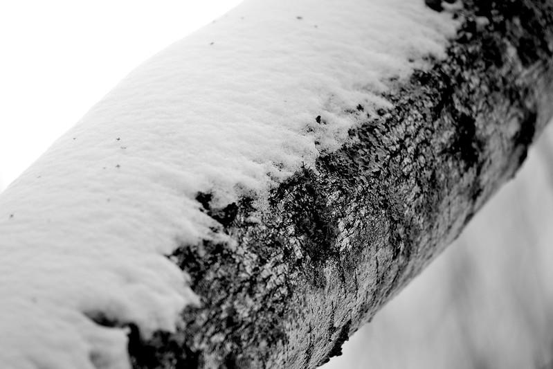 Flecks in snow