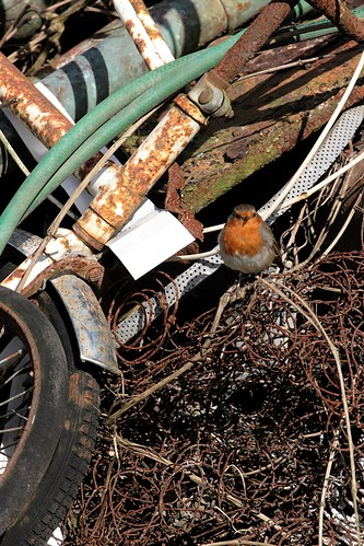 Rust red robin | by Cyclingrelf
