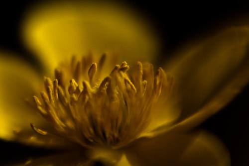 macro wisconsin lensbaby spring fujifilm composer 2010 s3pro naturesfinest dousman flowerotica bej citrit doubleglass