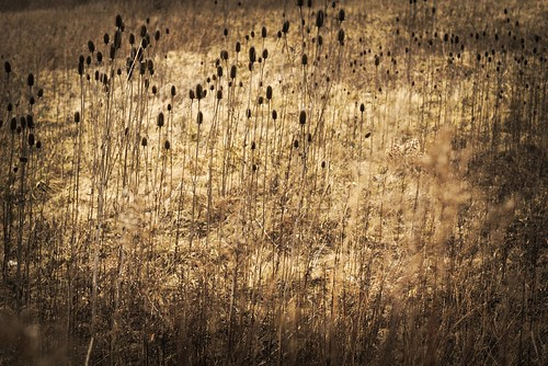 feild park landscape plant flower dead brown winter columbus ohio sony alpha a6000 minolta rokkor 50mm