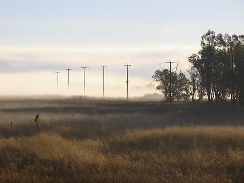 california morning fog sunrise landscape sacramento davis yolocauseway