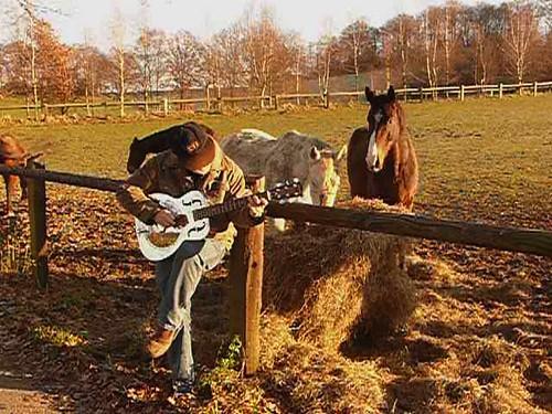 me, flabbergasting horses