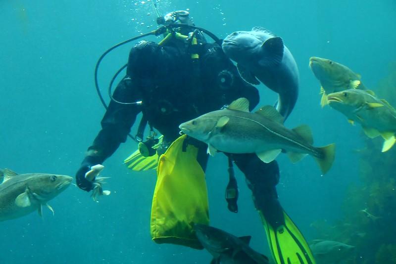 Lecker Tintenfisch
