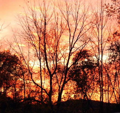 park autumn sunset sky leaves fun happy award magical day21 day22 niederösterreich shiningstar demonstratie mondfinsternis malieveld tamborrada beautifulpicture jan21 photographyrocks daysixteen daytwentyone project36521 flickraward cpbrasil day21365 nikonaward tipsytuesday nicesmilesir fotosöndag ds427 ds432 carolknepp