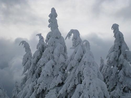 snow storm maine treetops skiresort bethel sundayriver