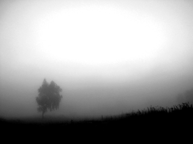 single tree in the mist