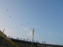 rotterdam centraal birds
