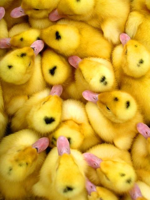 duck&co
