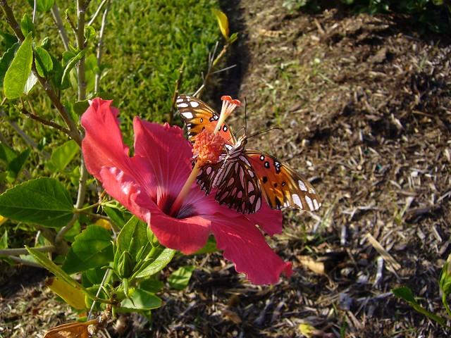 Nectar Paydirt