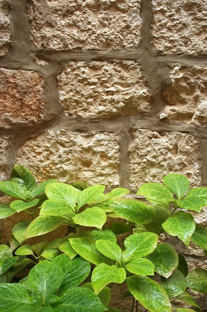 nature and stone wall