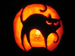 Cat-o-lantern   by insearchofwater