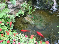 Koi Pond in the Butterfly Haven | by goatling