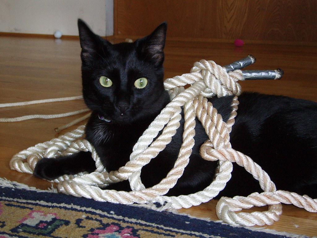 Bondage cat Adult Cat