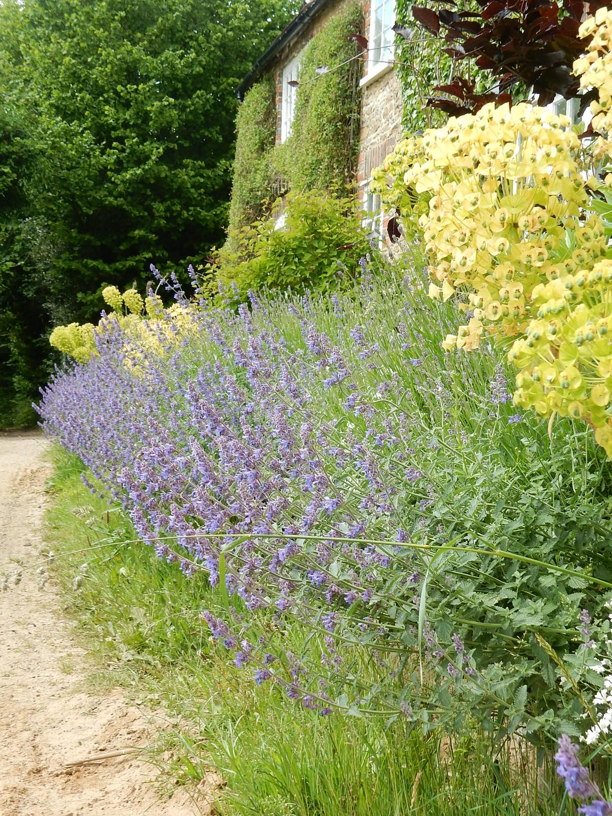 Cottage garden Milford to Godalming