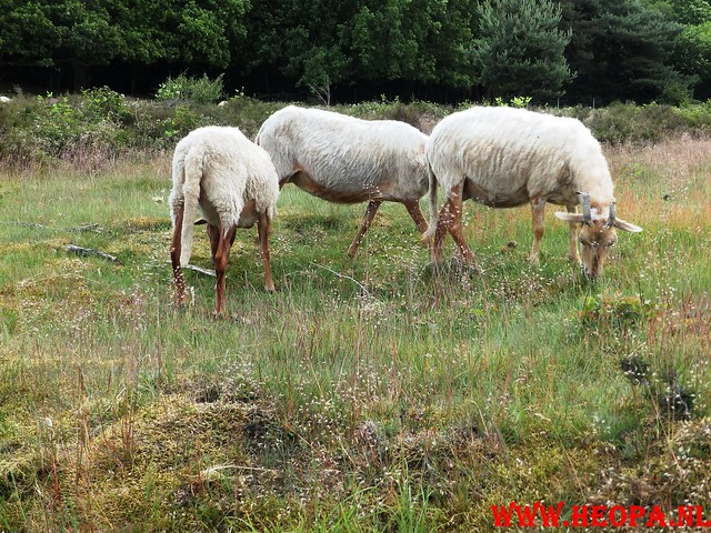 2015-06-27 F.K.C. 't Gooi Wandeltocht 36.4 km (45)