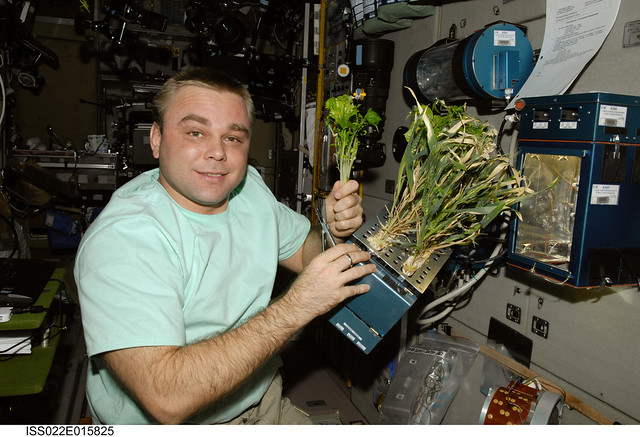 """Cosmonaut Maxim Suraev, Expedition 22 Flight Engineer, holds Mizun lettuce plants from the BIO-5 Rasteniya-2 (""""Plants-2"""") experiment in the Service Module during Expedition 20."""